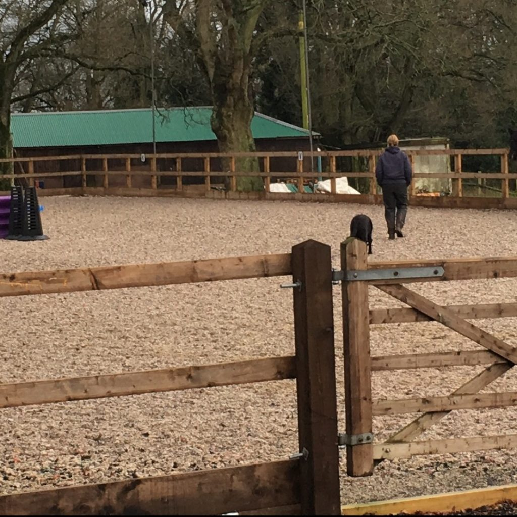New Forest Horse Riding Bagnum Equestrian Centre Ltd